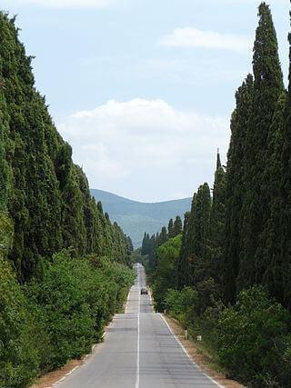 320px-Viale_dei_Cipressi,_Bolgheri,_Castagneto_Carducci
